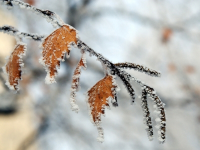 Зимата се пошегува, с клончe малко пофлиртува