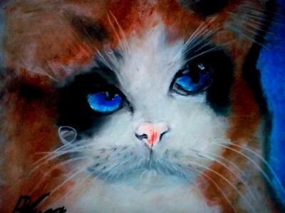 котка 2