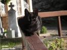 Манастирска котка